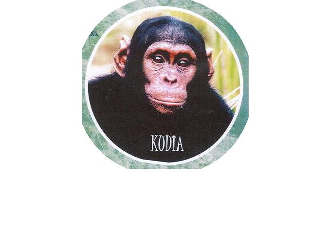 l'Institut Jane Goodall, qui répond aux besoins de plus de 150 chimpanzés par de parrainage de singes